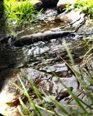 Der Lauf des Wassers